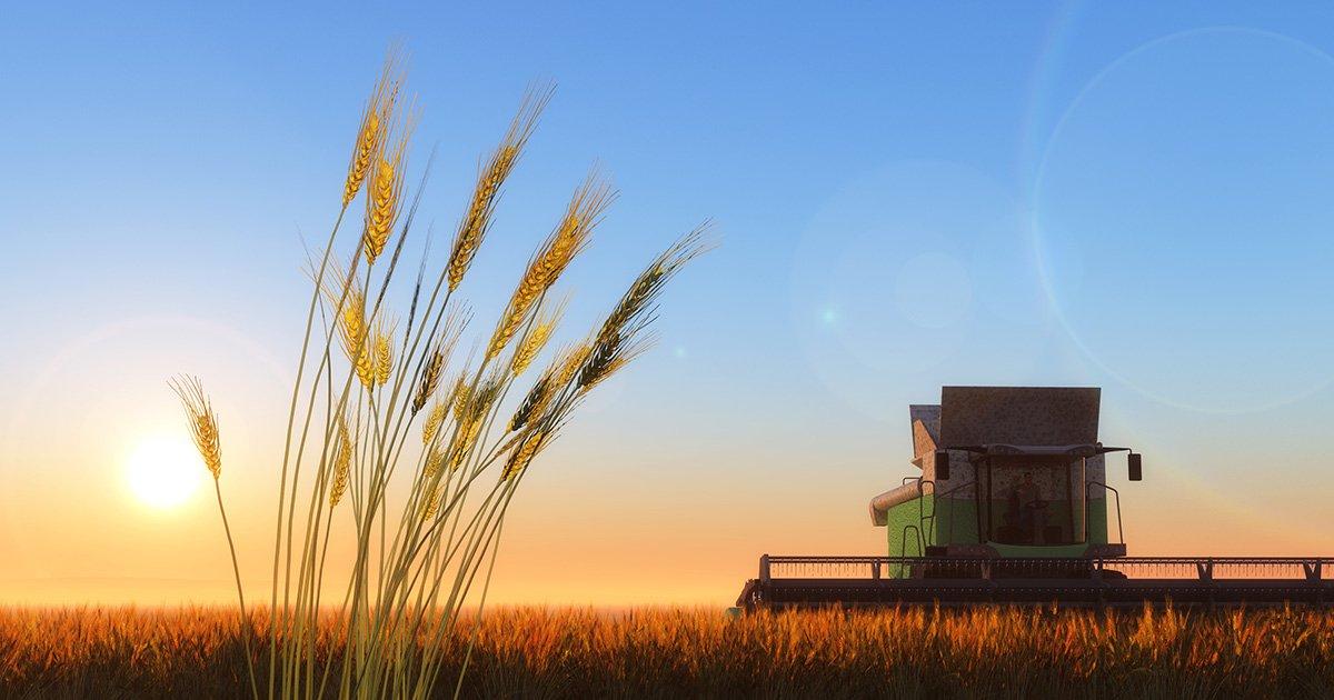 Фермеры массово отказываются выкупать арендуемые земли: что сдерживает рынок земли